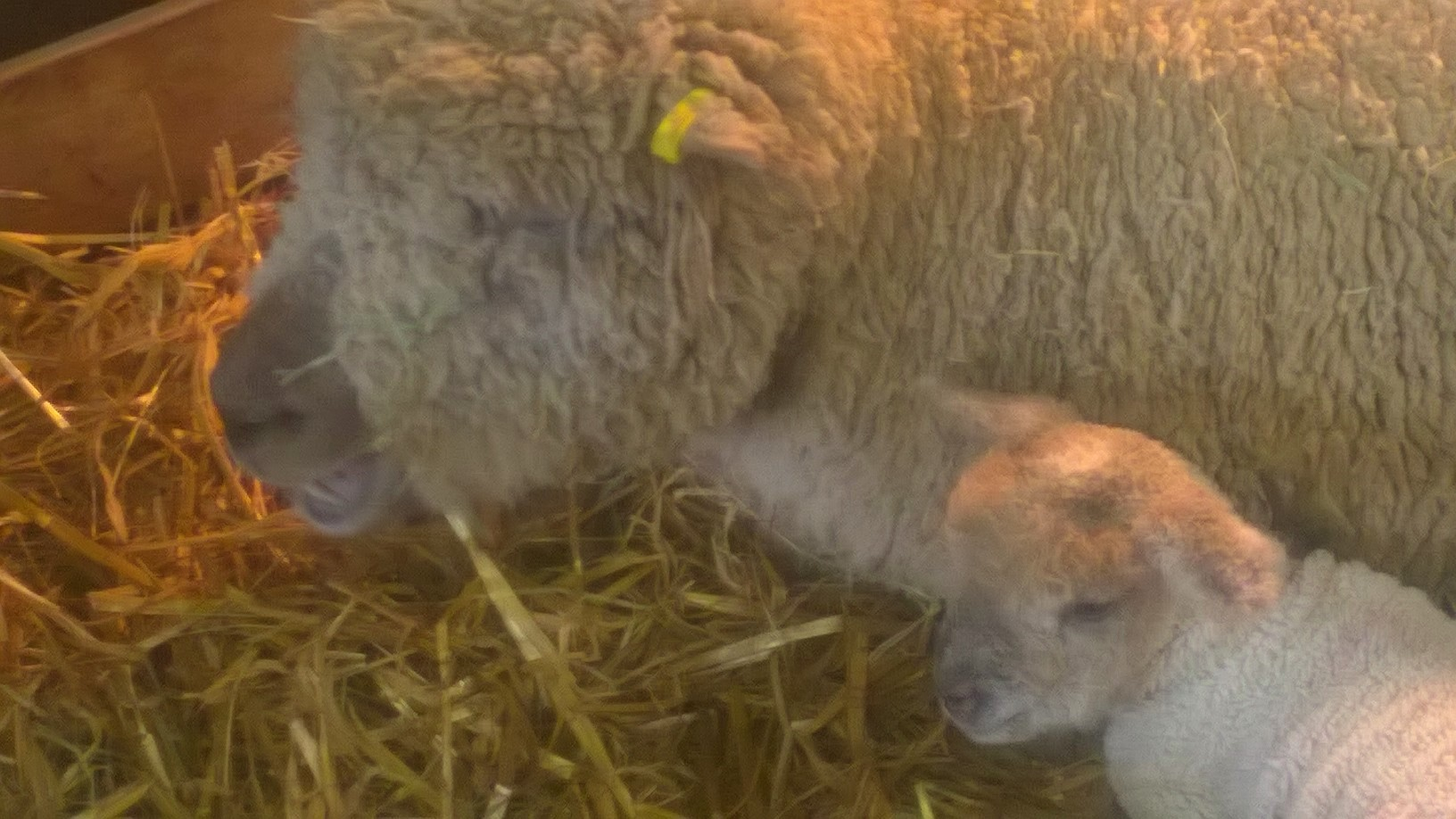 Primrose Farm with Southdown Duvet wool bedding