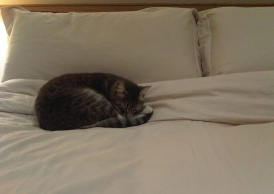 Cat asleep on a Southdown wool Duvet