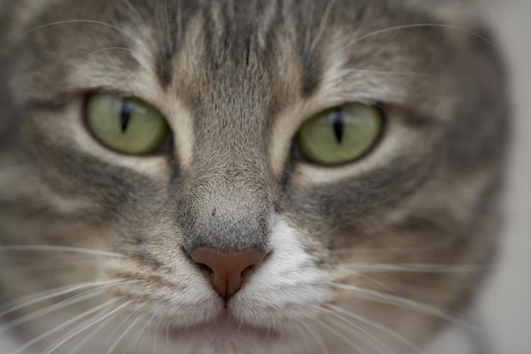 Jenga Primrose Farm cat