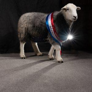 Southdown duvets, 100% British Southdown Wool