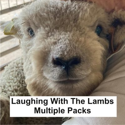 Laughing With The Lambs (Packs of 2)
